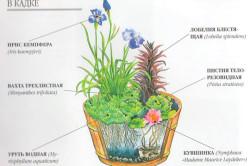 Подходящие растения для миниатюрного пруда на даче