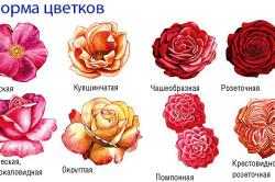 Формы бутонов роз
