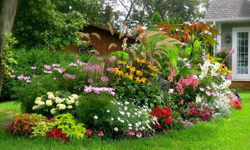 Многолетние тенелюбивые растения в саду