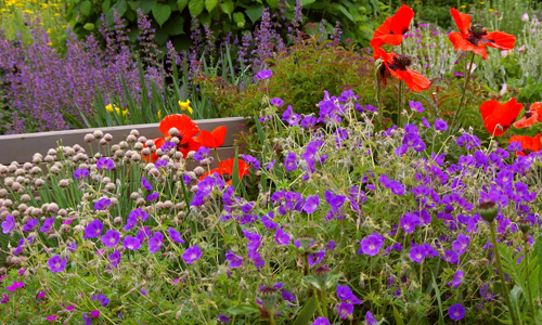 Сад с многолетними растениями