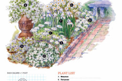 Схема белоснежного цветника