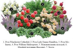 Схема клумбы с розами