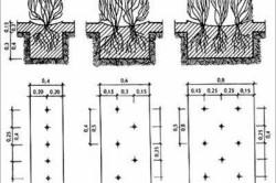Схема размеров живой изгороди