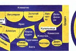 Схема желто-синей клумбы