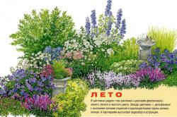 Вариант цветника для летнего периода