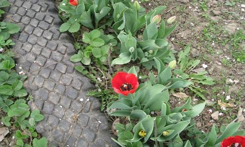 Садовая дорожка для дачи из старых шин