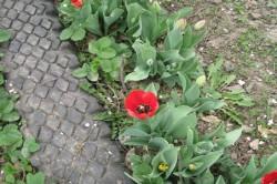 Садовая дорожка для сада из старых шин