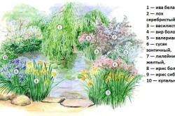 Схема устройства цветника у пруда