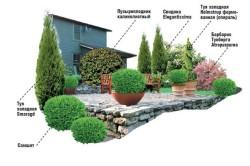 Вариант озеленения открытой веранды