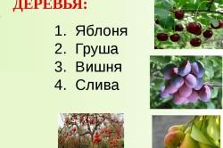 Виды фруктовых деревьев для сада