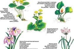 Варианты растений для пруда