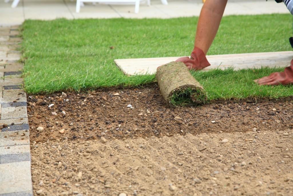Укладка газона своими руками технология