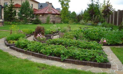 Декоративный огород на участке