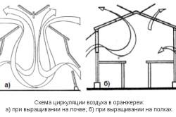 Схема циркуляции воздуха в оранжерее