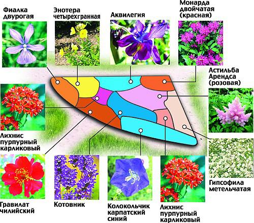 Схемы красивых цветников