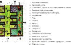 Схема огорода-полянки