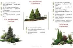 Композиции с хвойными растениями