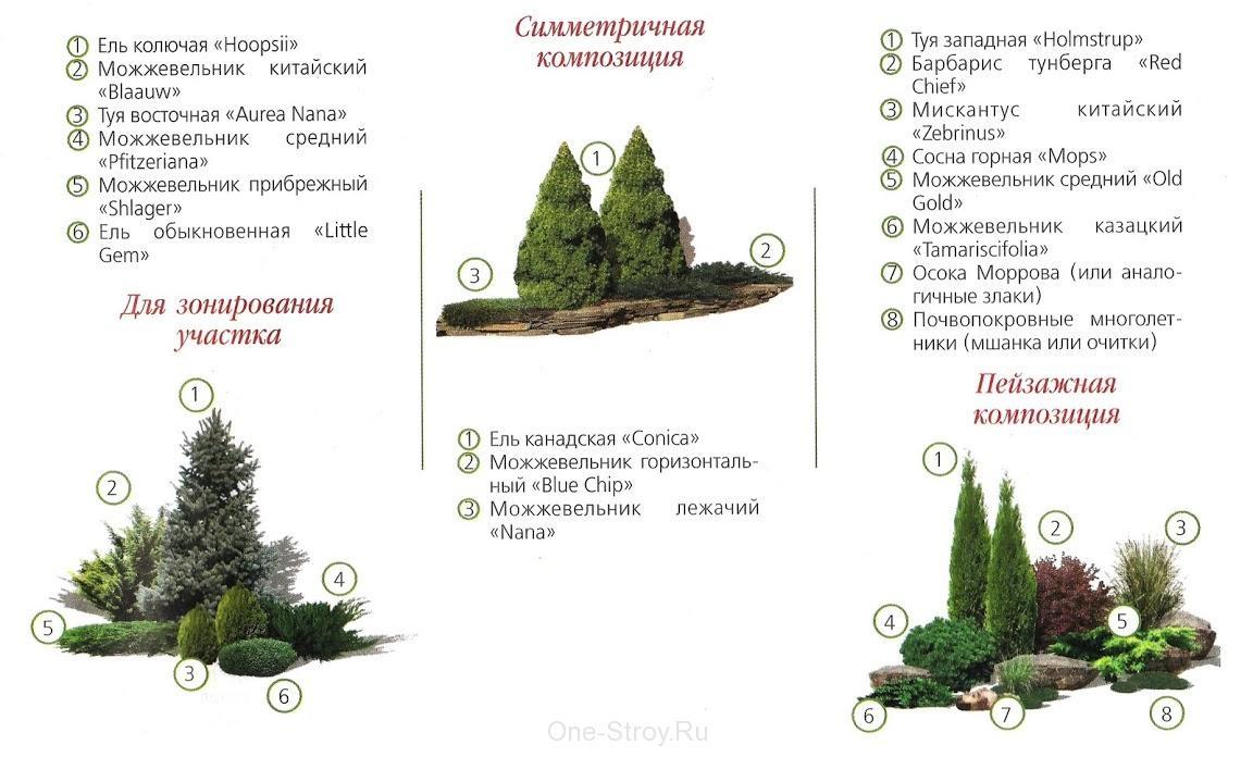Хвойные в ландшафтном дизайне