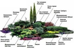 Вариант альпийской горки с хвойными растениями