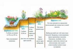 Схема оформления искусственного водоема для рыбы растениями