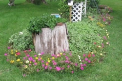Пень с цветами
